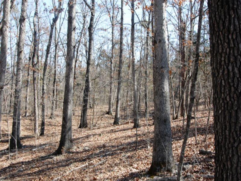 Timberland Close To Bull Shoals : Yellville : Marion County : Arkansas