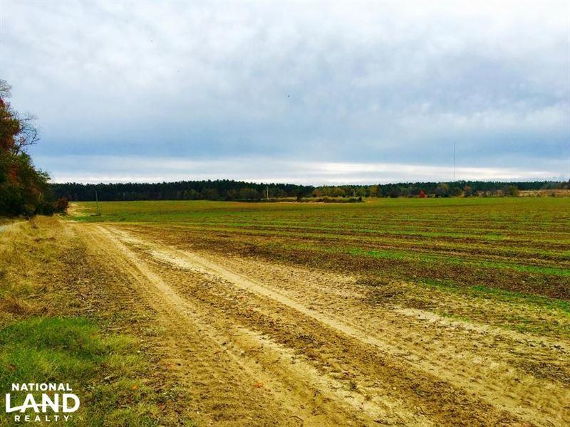 Farmland In Aiken And Barnwell : Williston : Barnwell County : South Carolina