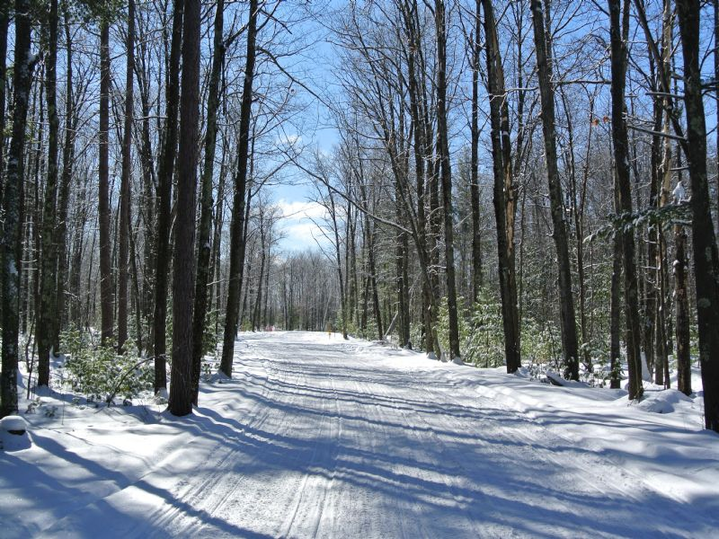 Large Lot Near Tons Of Recreation : Minocqua : Oneida County : Wisconsin
