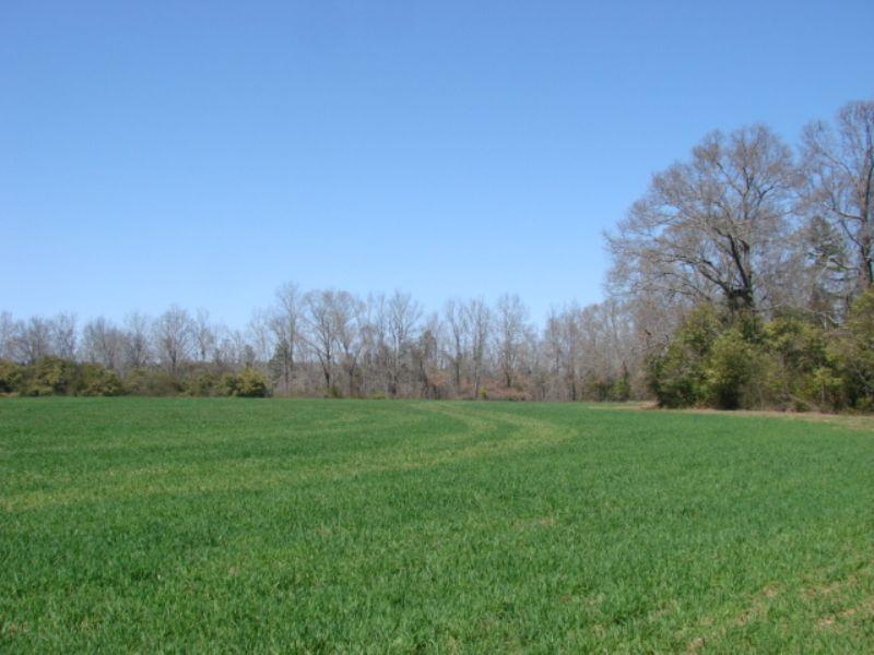 Beautiful 169 Acres - Big Hardwood : Butler : Taylor County : Georgia