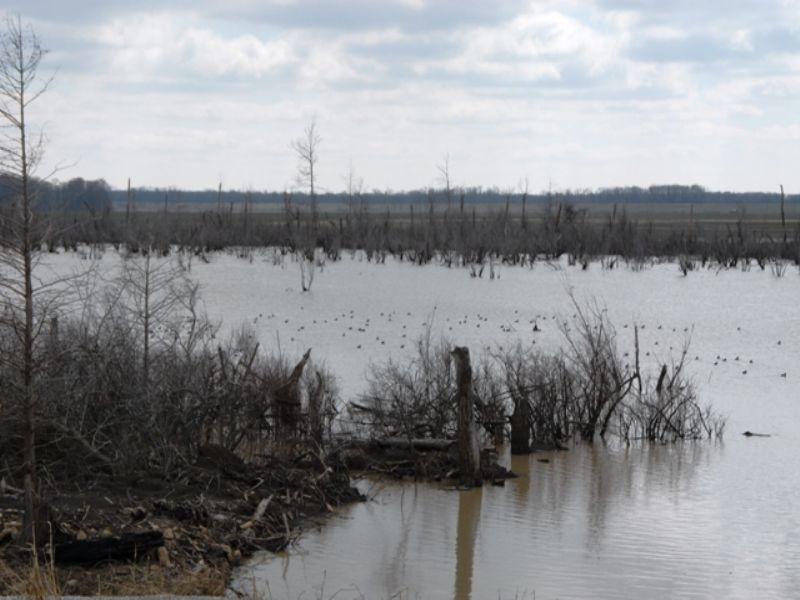 For Lease Duck Hunting Reservoir : Elaine : Phillips County : Arkansas