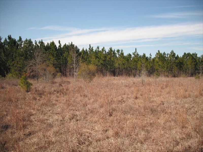 Affordable Hunting Land : Abbeville : Wilcox County : Georgia