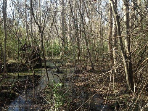 17.26 Acres - Sumter : Sumter : South Carolina