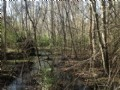 17.26 Acres - Sumter : Sumter : Sumter County : South Carolina