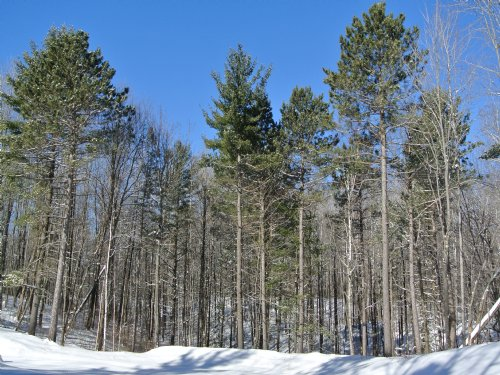 2 Lot Package Deal - Total 11.15 Ac : Minocqua : Oneida County : Wisconsin