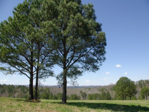 Gorgeous Views - Pond And Pasture : Oneonta : Blount County : Alabama