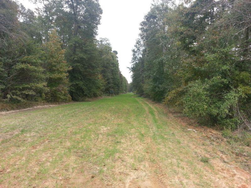 22111sa106 Bert : Farmerville : Union Parish : Louisiana