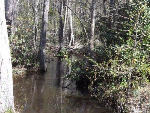 Red Rock Branch : Millen : Jenkins County : Georgia