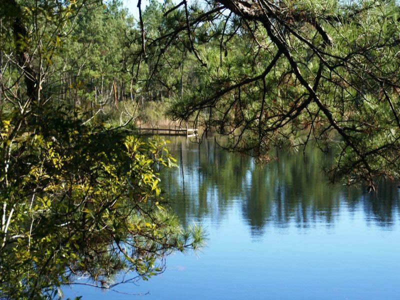 Honey Hole : Monticello : Jefferson County : Florida