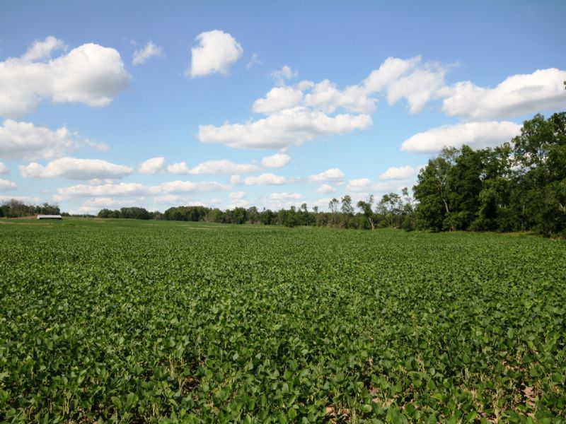 104 Acres With 85 Acres Tillable : New London : Ralls County : Missouri
