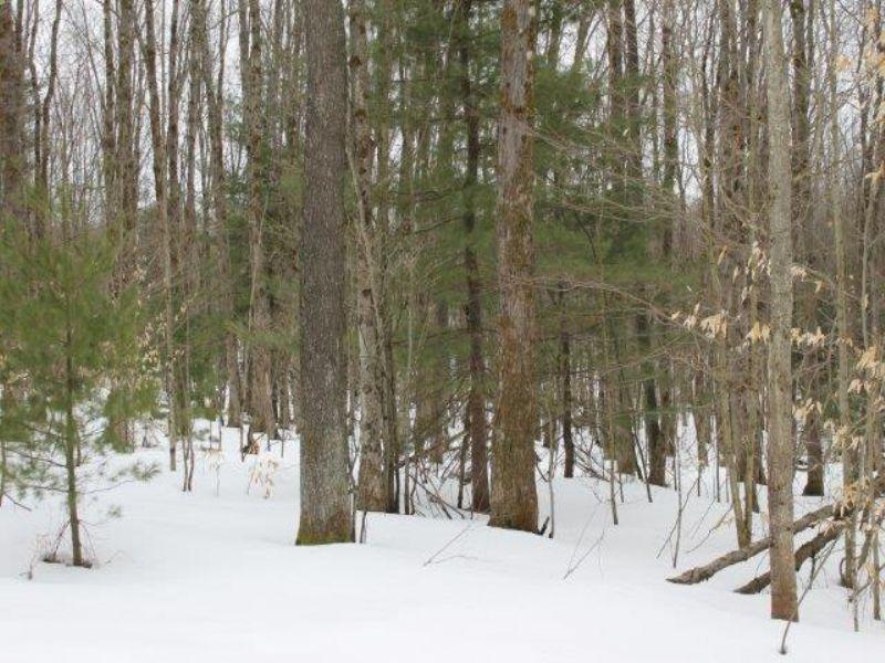 20 Acres Borders State Land Woods : Amboy : Oswego County : New York