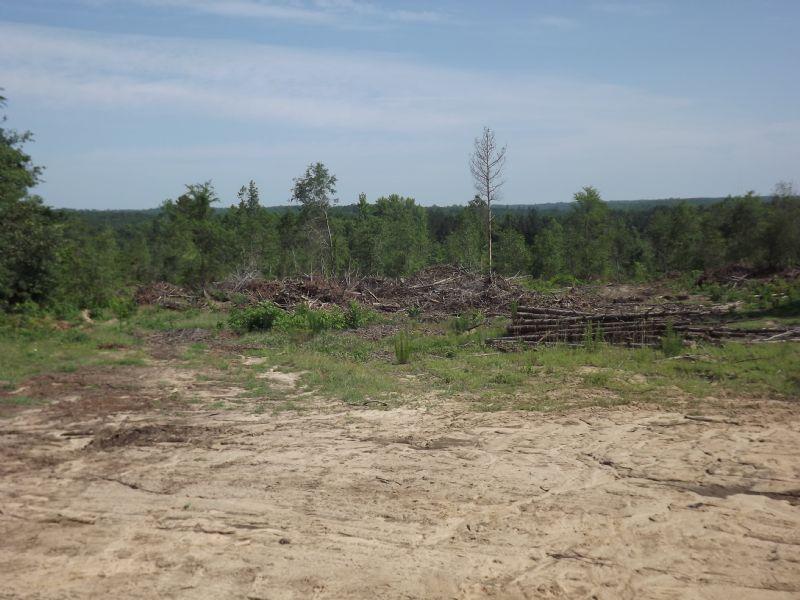 Cutover Land : Milledgeville : Baldwin County : Georgia