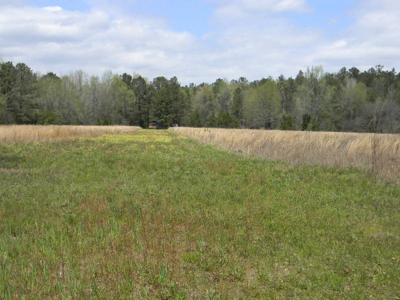 52 Acres Hunting Tract : Autaugaville : Autauga County : Alabama