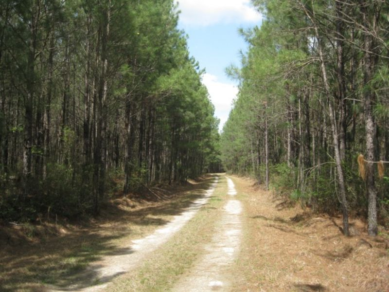 Uncle Bob's Tract : Ruffin : Colleton County : South Carolina