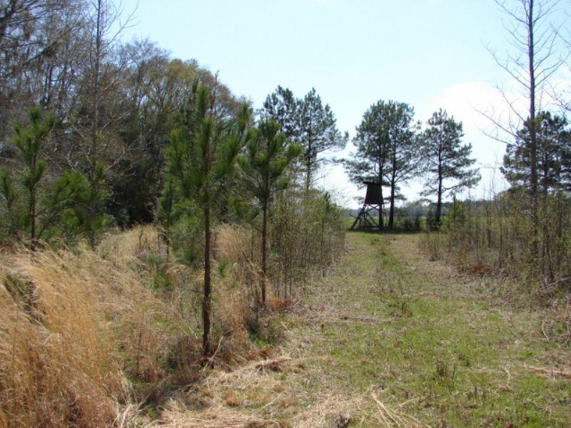 Hunting Land Near River : Autaugaville : Autauga County : Alabama