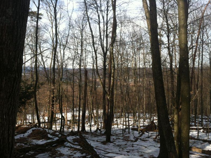 226 +/- Acres Land Auction : Danville : Montour County : Pennsylvania