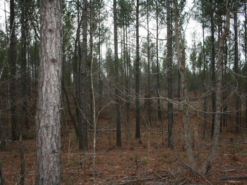 Rice Tract  2741 : Abbeville : Abbeville County : South Carolina