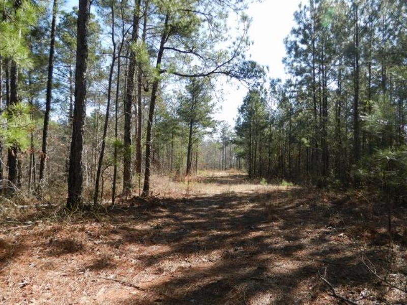 30+/- Ac Near Lake Martin : Alexander City : Tallapoosa County : Alabama