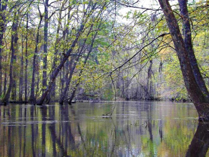 75+/- River Creek Bluff : Millen : Jenkins County : Georgia