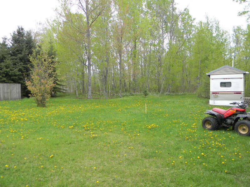 Excellent Hunting Land : Lake City : Missaukee County : Michigan