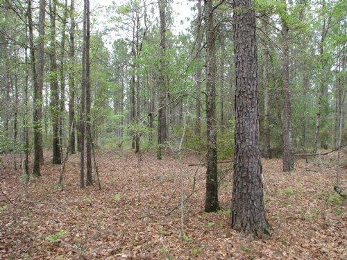 Neuschwander Rd : Uriah : Monroe County : Alabama