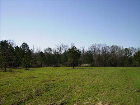 Great Home Site Close To I-75 : Perry : Peach County : Georgia