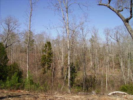 Rare Find 10 Acres Great Location : Perry : Peach County : Georgia