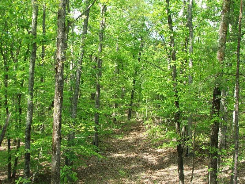 Bulldog Bend Tract : Brierfield : Bibb County : Alabama