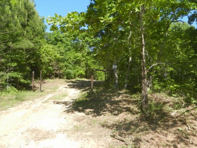 9.2+/-  Wooded Acres : Sylacauga : Talladega County : Alabama