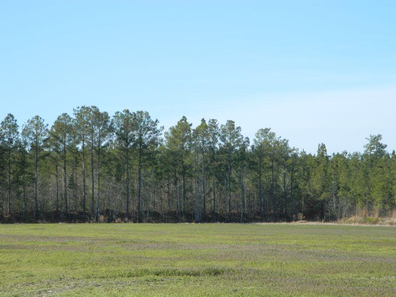 Old Tram Road Tract : Raemon : Robeson County : North Carolina