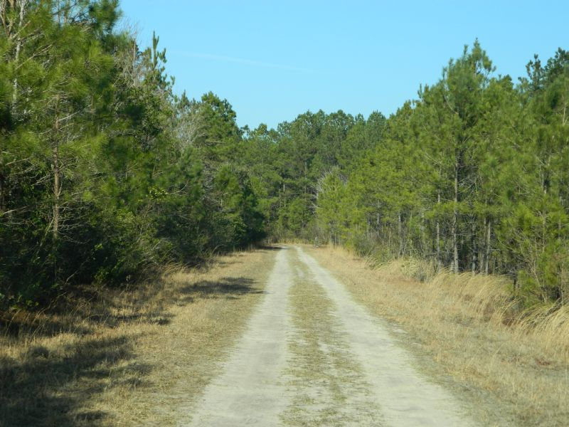 George Walker Tract : Burgaw : Pender County : North Carolina