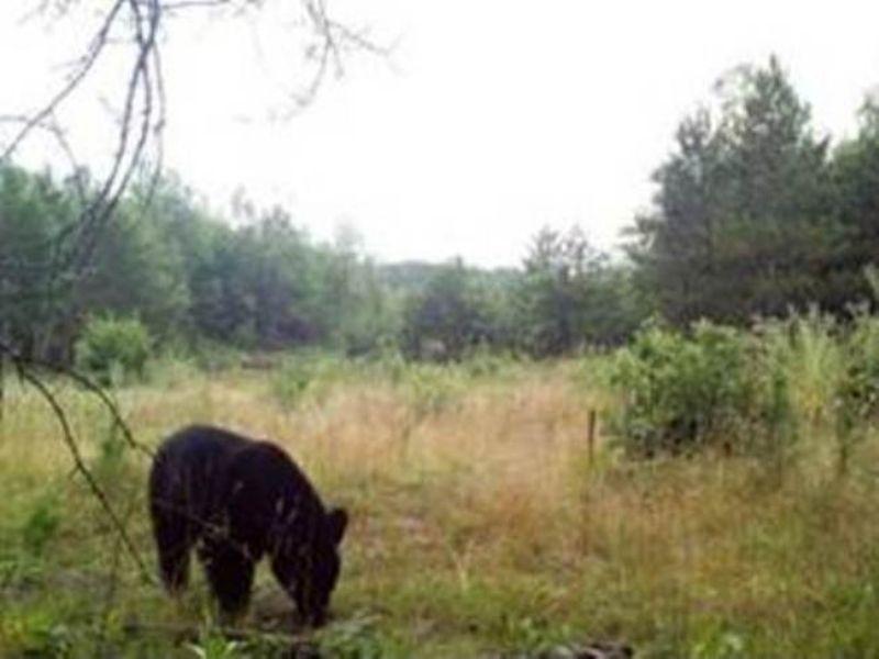 Morrison, Ripley Nw : Pillager : Morrison County : Minnesota
