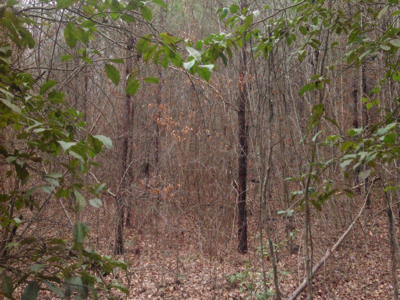 22069hb001 Ptp 33c : Goldonna : Natchitoches Parish : Louisiana