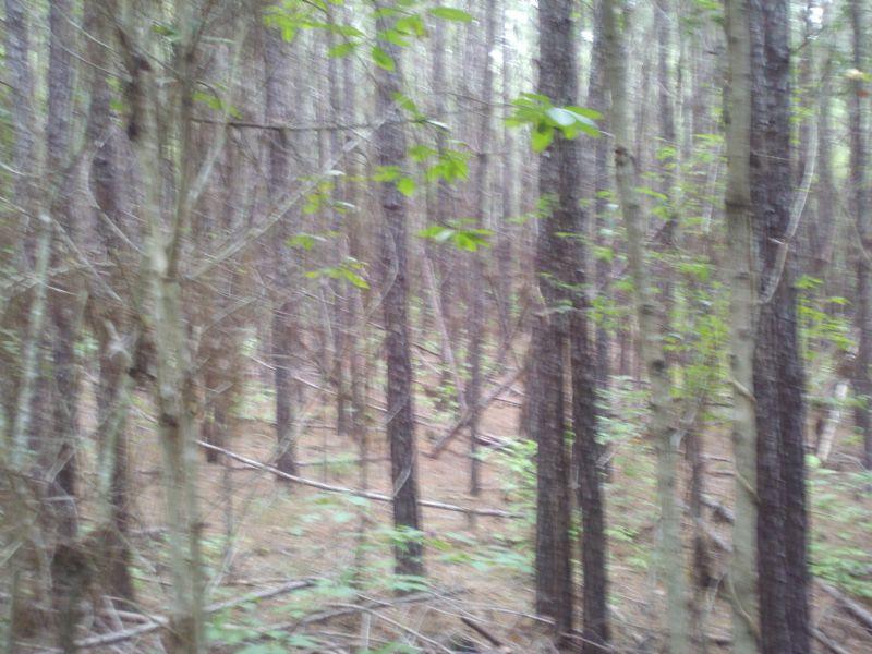 22127hb004 Ptp East Shore : Winnfield : Winn Parish : Louisiana