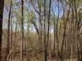 15.45 Acre Wooded Homesite Cheap