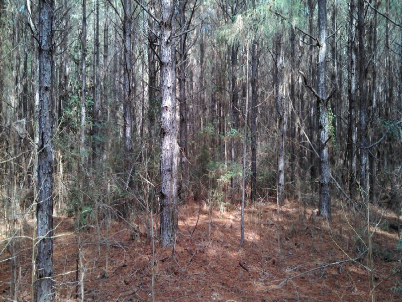 22127hb010 Ptp Gov : Winnfield : Winn Parish : Louisiana