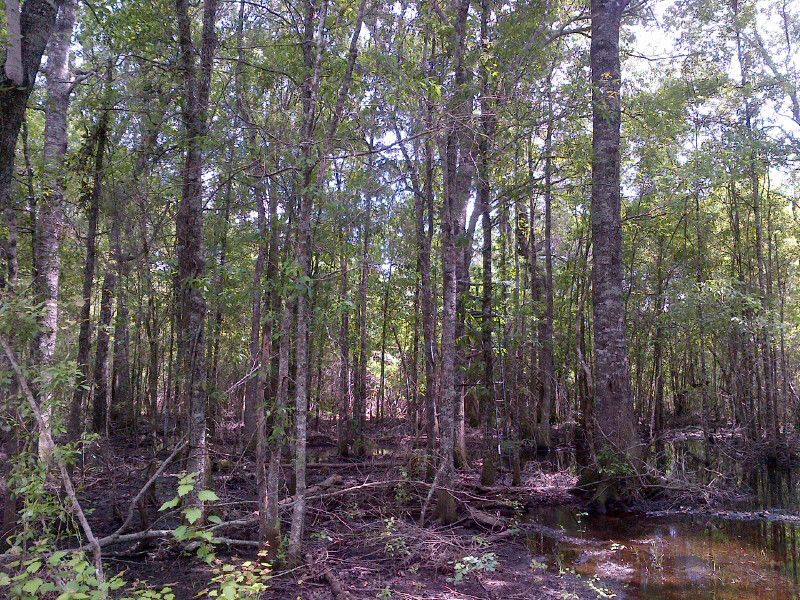 Owner Financed Small Hunting Tract : Abbeville : Wilcox County : Georgia