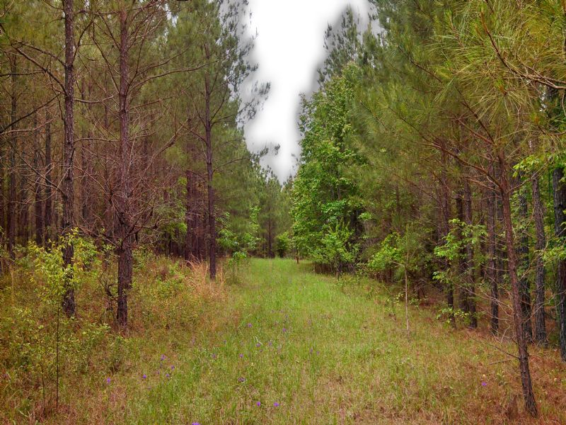 405 Acre Timber/hunting Property : Toombsboro : Wilkinson County : Georgia