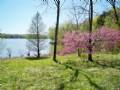Waterfront - Lake Barkley 140 Ac in Trigg County, Kentucky