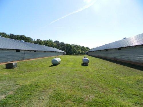 30 Acre Pullet Farm : Crawford : Oglethorpe County : Georgia