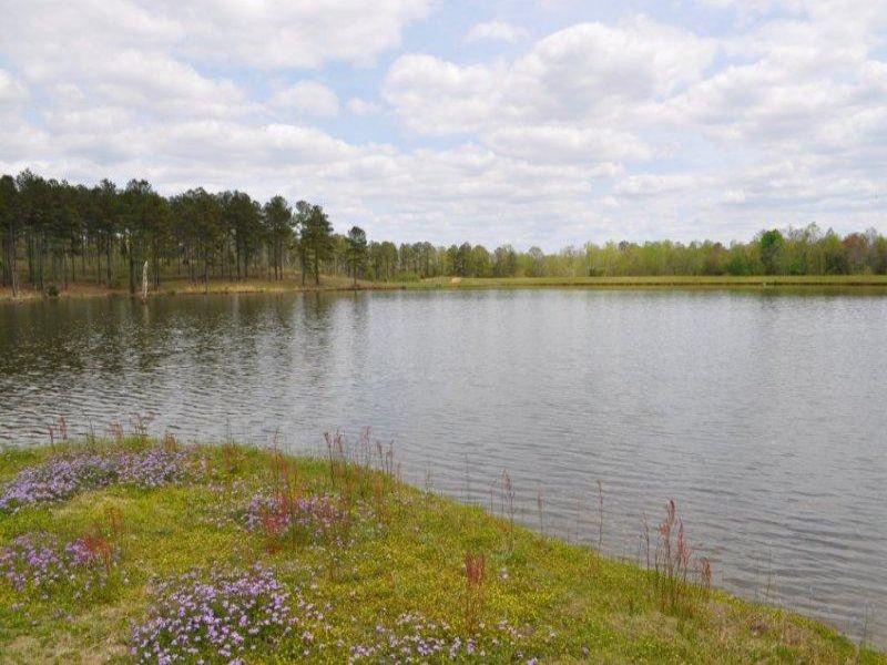 Ivy Creek Farm : Rutledge : Crenshaw County : Alabama