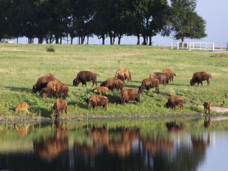 Classic Texas Style Ranch Estate : Honey Grove : Fannin County : Texas