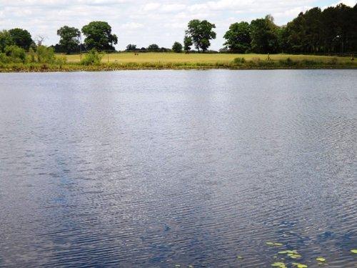 Lanier Pond Farm : Cobbtown : Candler County : Georgia