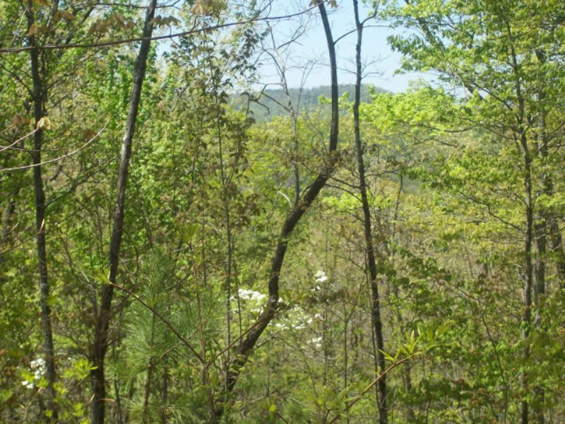 Residential Land : Ellijay : Gilmer County : Georgia