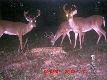 227 Acres Of Prime Hunting Land : Girard : Burke County : Georgia