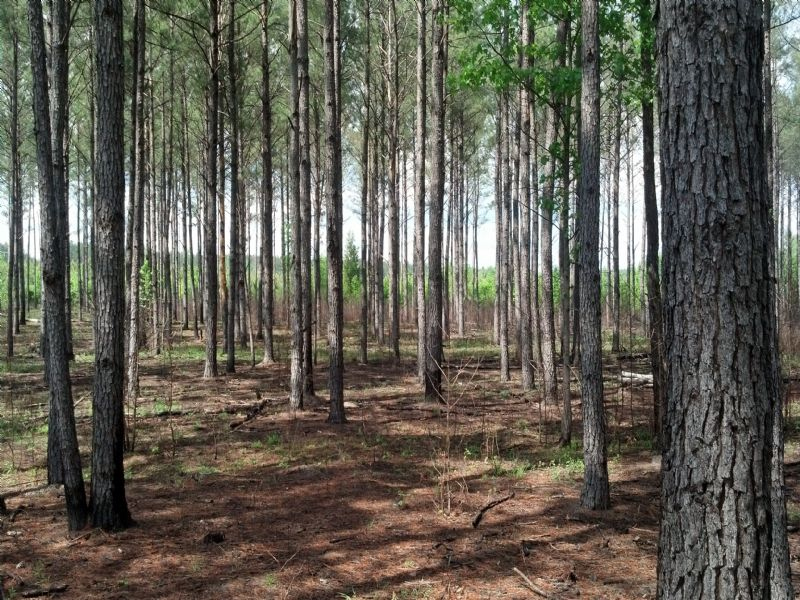 Brock Tract : Valley : Chambers County : Alabama