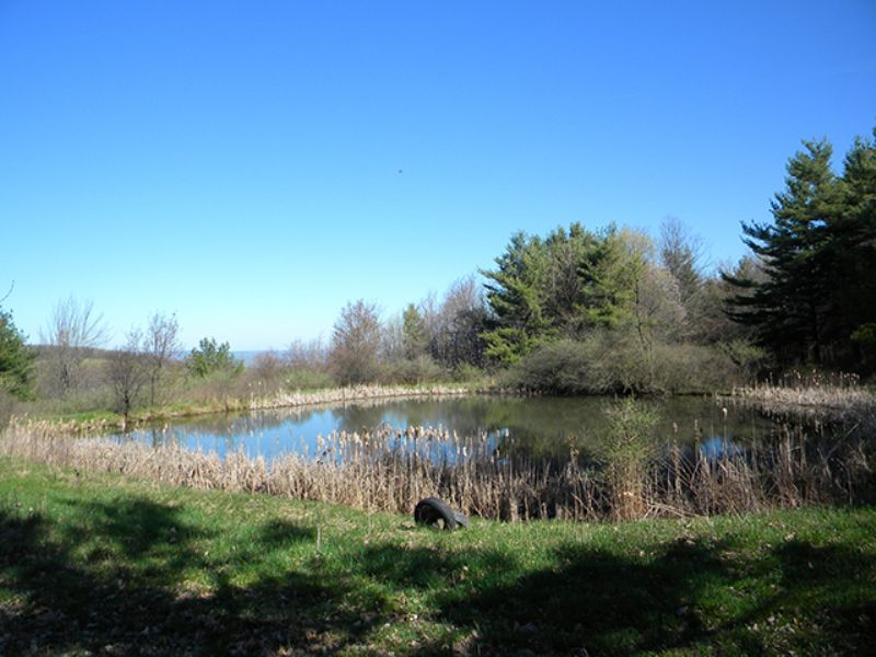 35 Acres Pond Woods Views Private : Catharine : Schuyler County : New York