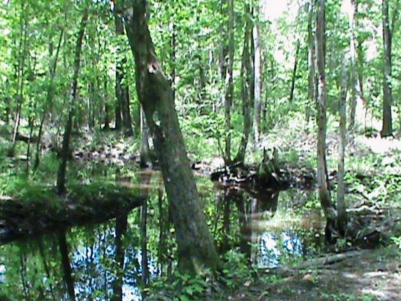 Cypress Creek Tract : Millen : Jenkins County : Georgia