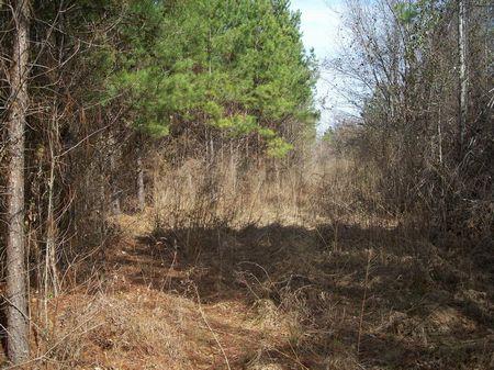 96 (+-) Acres Timber, Creek, Deer : Americus : Sumter County : Georgia