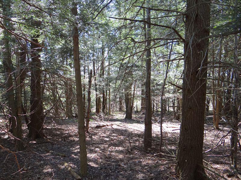 5 Acres Private Remote Views : Smyrna : Chenango County : New York